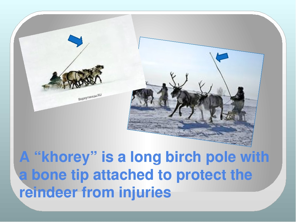 "A ""khorey"" is a long birch pole with a bone tip attached to protect the reind..."