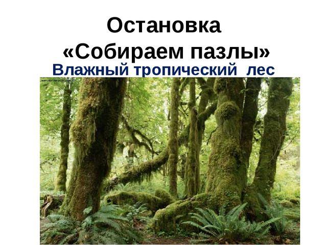 Влажный тропический лес Остановка «Собираем пазлы»