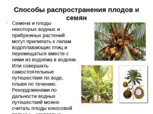 Способы распространения плодов и семян Семена и плоды некоторых водных и при