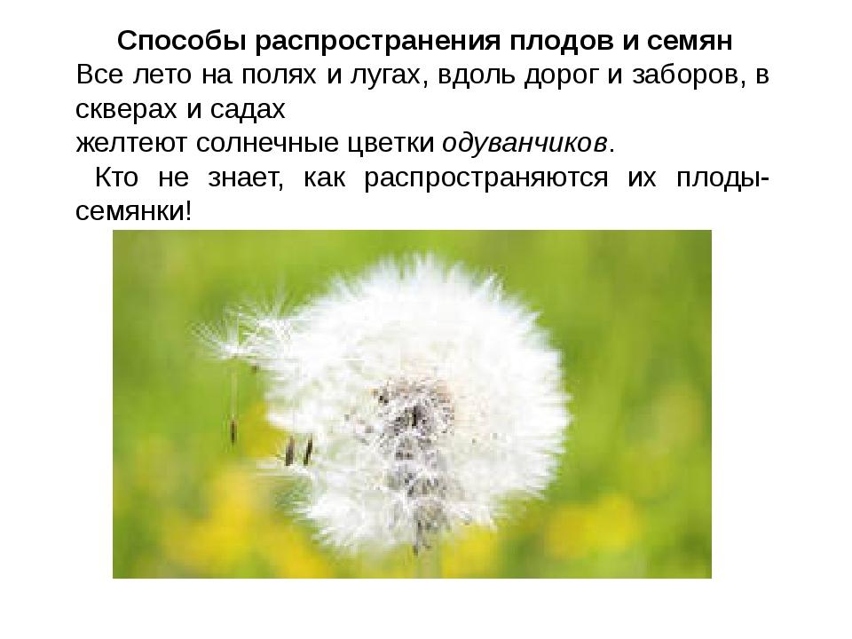 Способы распространения плодов и семян Все лето на полях и лугах, вдоль доро...