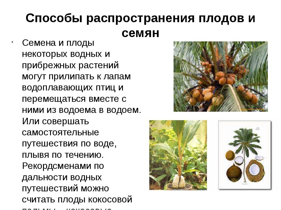 Способы распространения плодов и семян Семена и плоды некоторых водных и при...