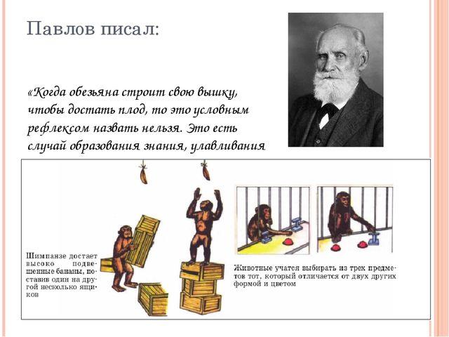 Павлов писал: «Когда обезьяна строит свою вышку, чтобы достать плод, то это у...