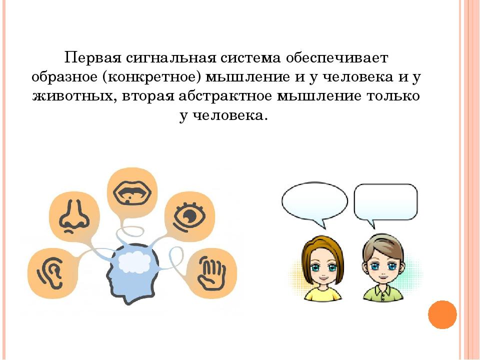 Первая сигнальная система обеспечивает образное (конкретное) мышление и у чел...