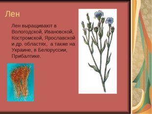 Лен Лен выращивают в Вологодской, Ивановской, Костромской, Ярославской и др.