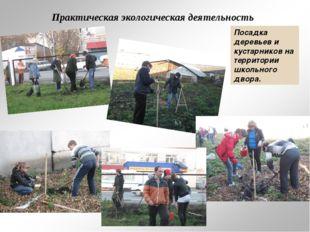 Практическая экологическая деятельность Посадка деревьев и кустарников на тер