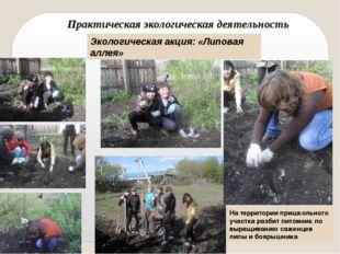 Экологическая акция: «Липовая аллея» Практическая экологическая деятельность