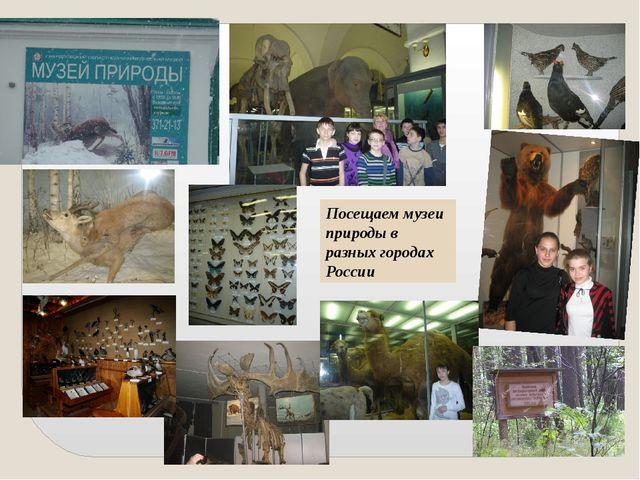 Посещаем музеи природы в разных городах России
