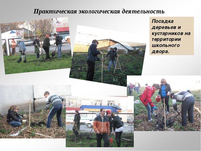 Практическая экологическая деятельность Посадка деревьев и кустарников на тер...