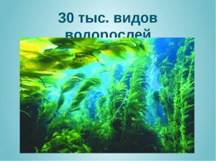 30 тыс. видов водорослей