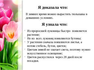 Я доказала что: В зимнее время можно вырастить тюльпаны в домашних условиях.