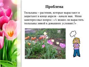 Проблема Тюльпаны – растения, которые вырастают и зацветают в конце апреля -