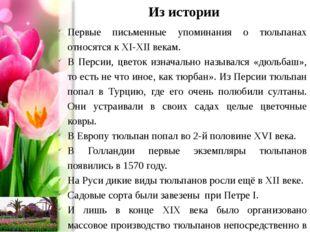 Из истории Первые письменные упоминания о тюльпанах относятся к XI-XII векам.