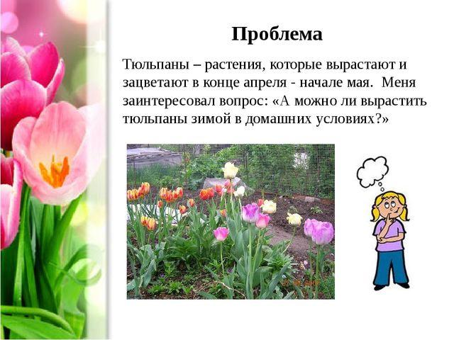 Проблема Тюльпаны – растения, которые вырастают и зацветают в конце апреля -...
