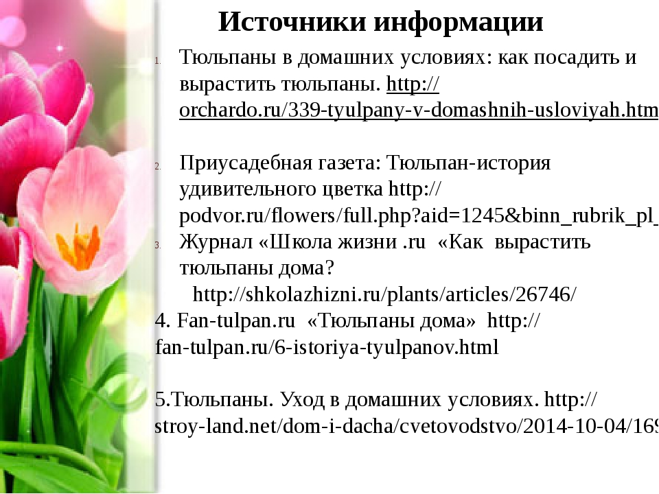 Источники информации Тюльпаны в домашних условиях: как посадить и вырастить т...