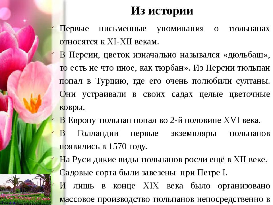 Из истории Первые письменные упоминания о тюльпанах относятся к XI-XII векам....