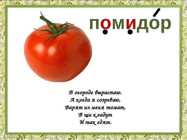 В огороде вырастаю. А когда я созреваю, Варят из меня томат, В щи кладут И та...
