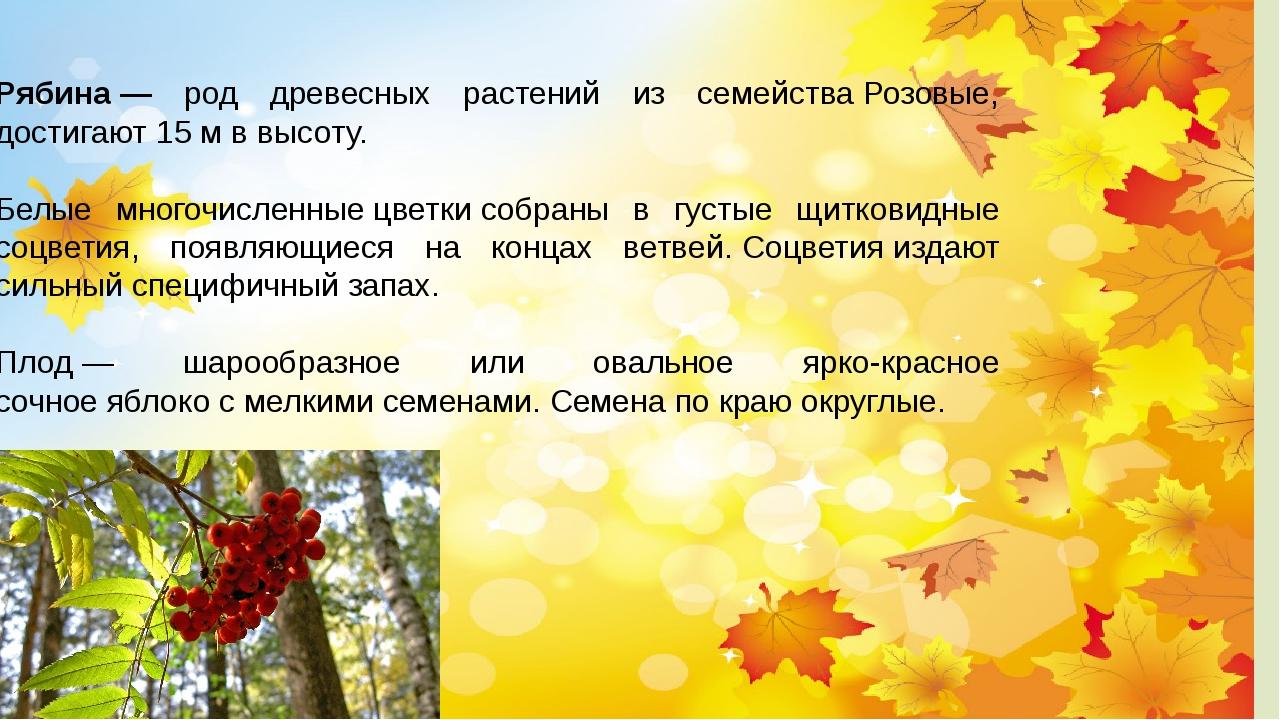 Рябина— род древесных растений из семействаРозовые, достигают 15м в высот...