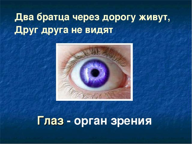Два братца через дорогу живут, Друг друга не видят Глаз - орган зрения