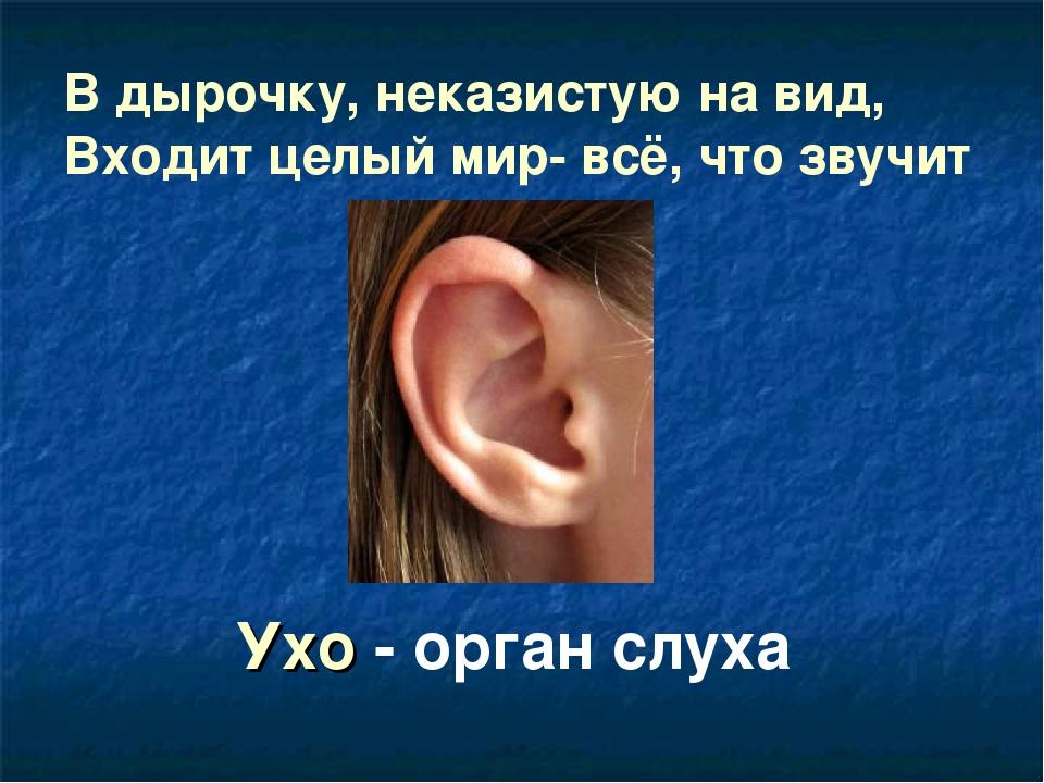В дырочку, неказистую на вид, Входит целый мир- всё, что звучит Ухо - орган с...