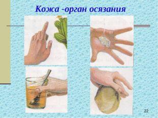 Кожа -орган осязания