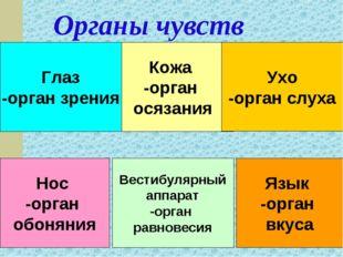 Органы чувств Глаз -орган зрения Глаз -орган зрения Глаз -орган зрения Кожа -
