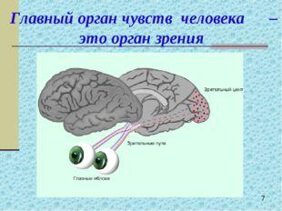 Главный орган чувств человека – это орган зрения