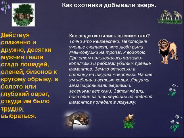 Как охотники добывали зверя. Как люди охотились на мамонтов? Точно это неизве...
