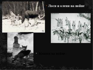 Лоси и олени на войне Кошки на войне