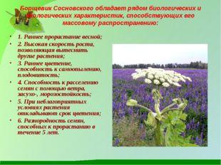 Борщевик Сосновского обладает рядом биологических и экологических характерист