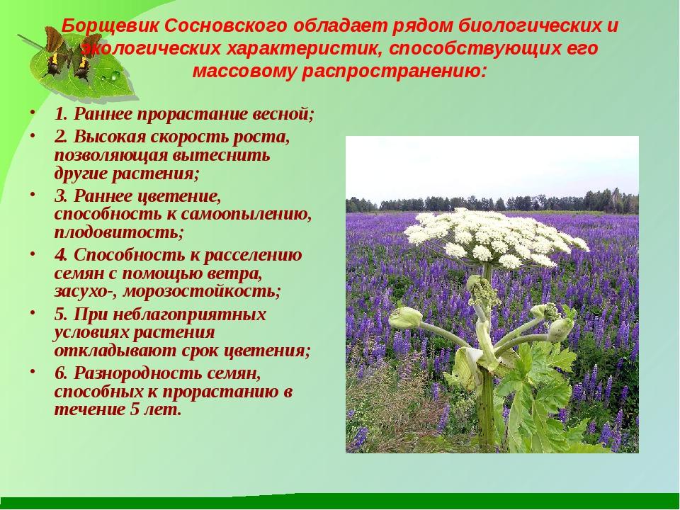 Борщевик Сосновского обладает рядом биологических и экологических характерист...
