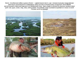 Волго- Ахтубинская пойма и дельта Волги — удивительное место, где с полупусты