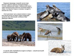Пищевую пирамиду озерной экосистемы венчает типично морское млекопитающее —