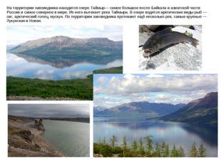 На территории заповедника находится озеро Таймыр— самое большое после Байкала