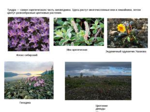 Тундра — самая «арктическая» часть заповедника. Здесь растут многочисленные м