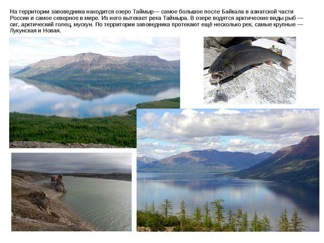На территории заповедника находится озеро Таймыр— самое большое после Байкала...