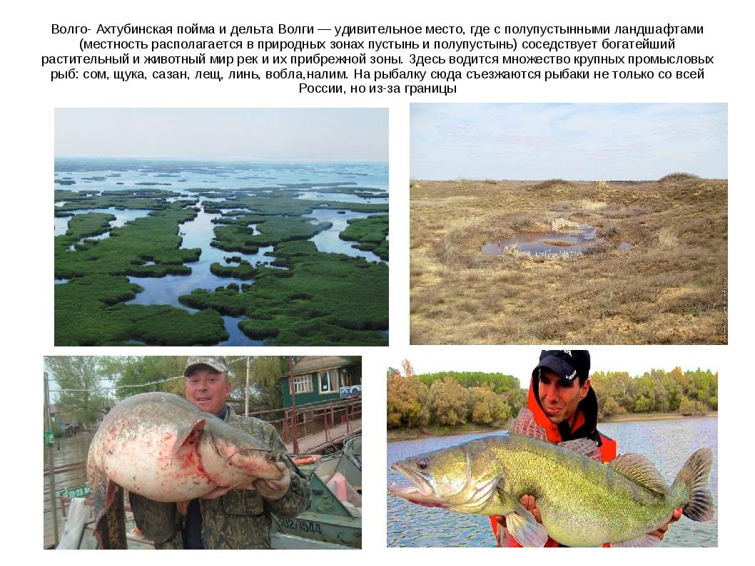Волго- Ахтубинская пойма и дельта Волги — удивительное место, где с полупусты...