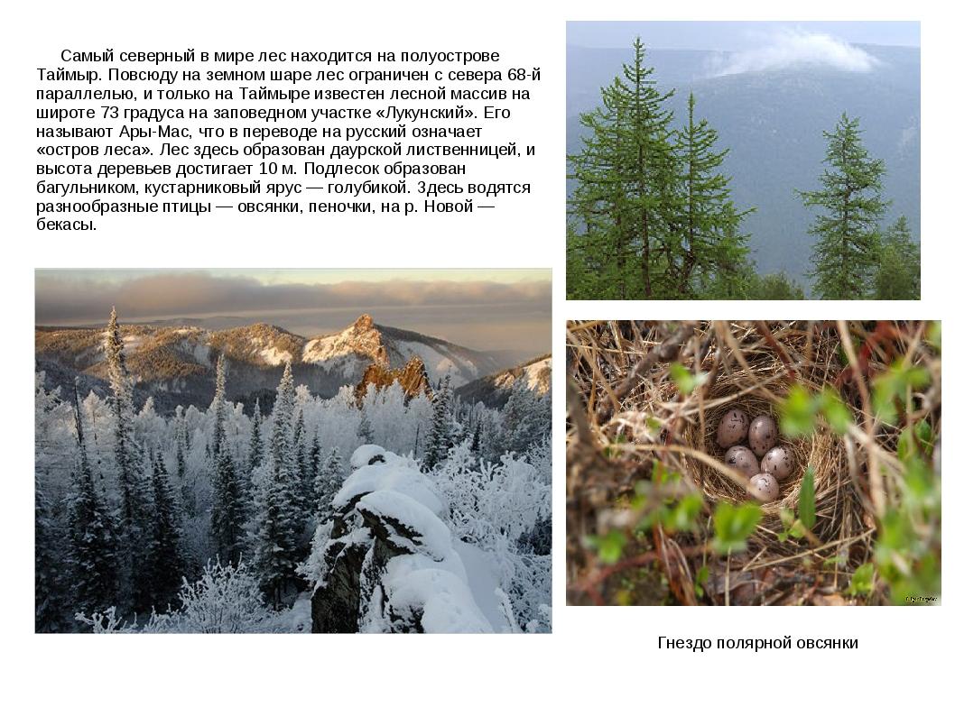 Самый северный в мире лес находится на полуострове Таймыр. Повсюду на земном...