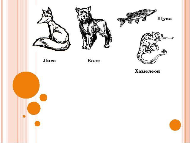 Лиса Волк Щука Хамелеон