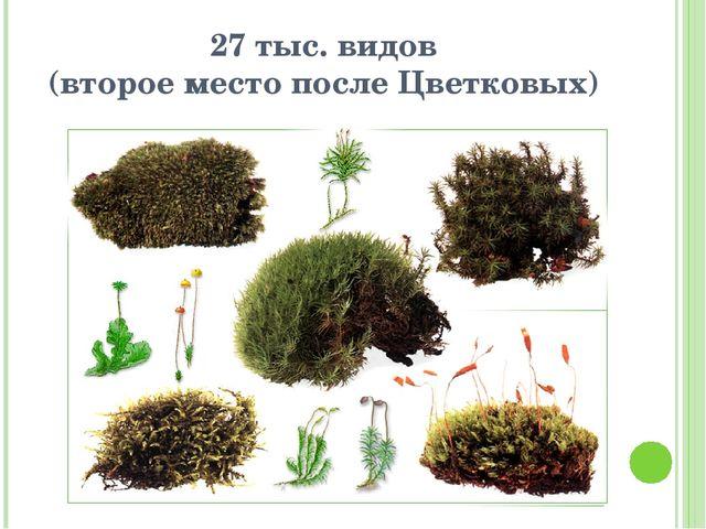 27 тыс. видов (второе место после Цветковых)