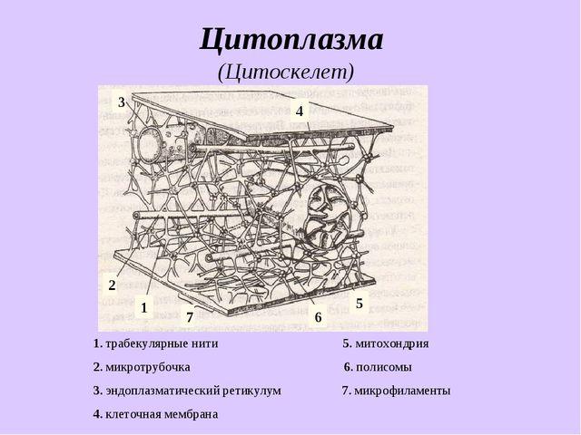 Цитоплазма 1. трабекулярные нити 5. митохондрия 2. микротрубочка 6. полисомы...