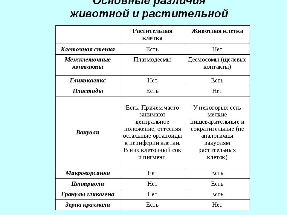Основные различия животной и растительной клеток Растительная клеткаЖивотн...