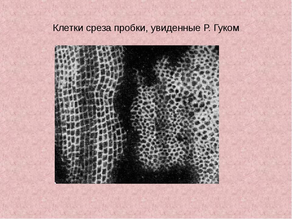 Клетки среза пробки, увиденные Р. Гуком