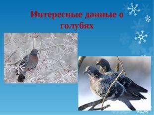 Интересные данные о голубях