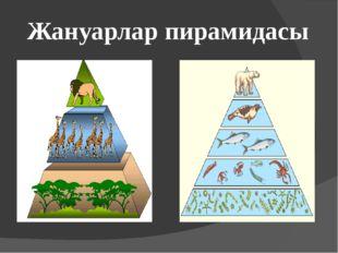 Жануарлар пирамидасы