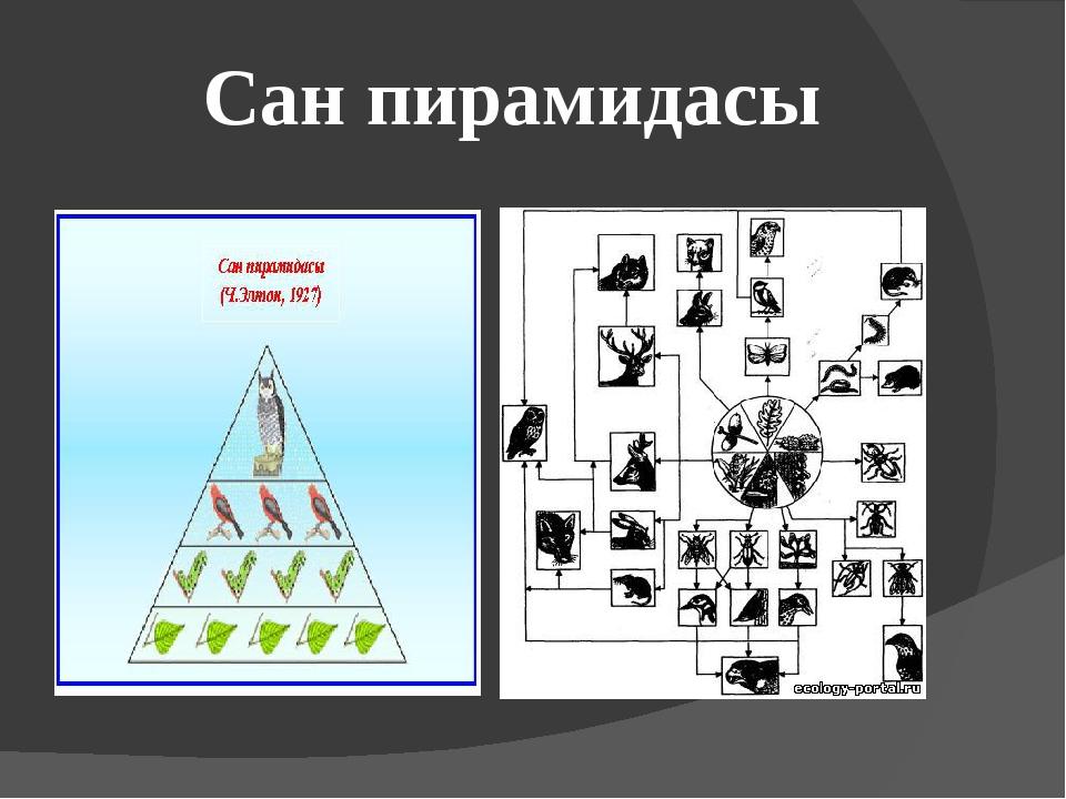 Сан пирамидасы