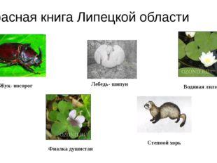 Красная книга Липецкой области Жук- носорог Лебедь- шипун Водяная лилия Фиал