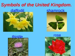 Symbols of the United Kingdom. rose thistle daffodil shamrock