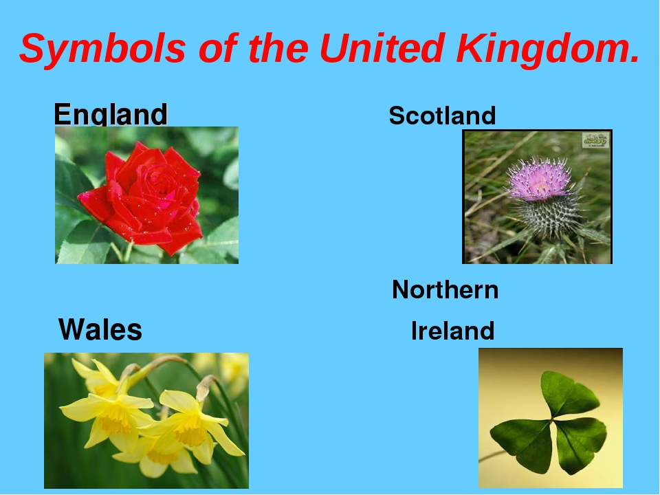 Symbols of the United Kingdom. England Scotland Northern Wales Ireland
