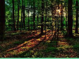 Лесные ресурсы На нашей планете лесами занято около 4 млрд га земель (около 3