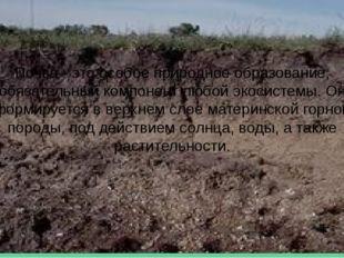 Почва - это особое природное образование, обязательный компонент любой экосис